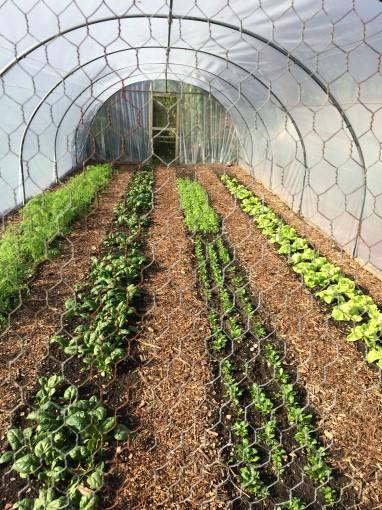 Poly tunnel for organic vegetables